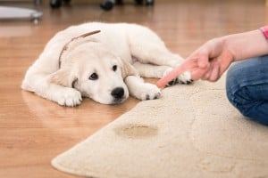 Pet Odor and Stains