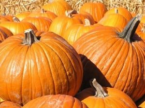 Pumpkin Festival Elk Grove