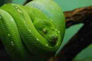 Serpentarium Lodi