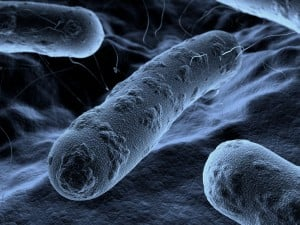 Bacteria Mold and Allergens Sacramento CA