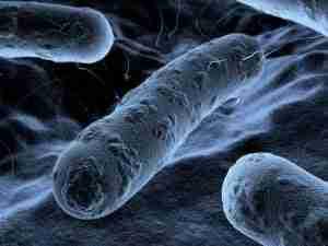 Bacteria Mold and Allergens Sacramento CA