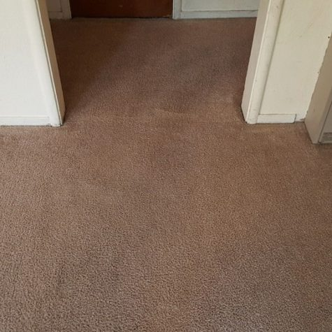 carpet cleaning after 8