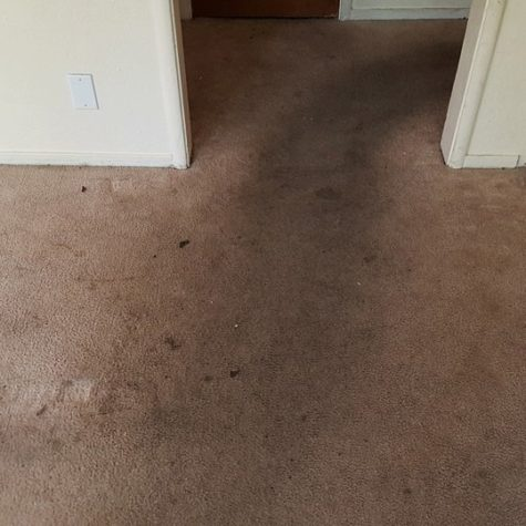 carpet cleaning before 8